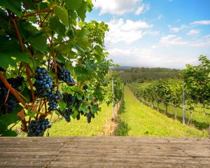 Chile vineyards for sale
