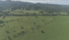 Colombia Farm Investment Timber Cattle Coconut